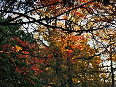 Cefn Onn Park