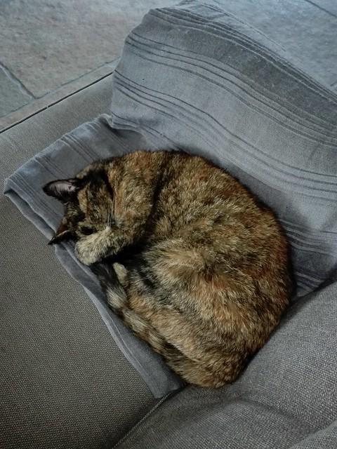 Slapende kat op de bank