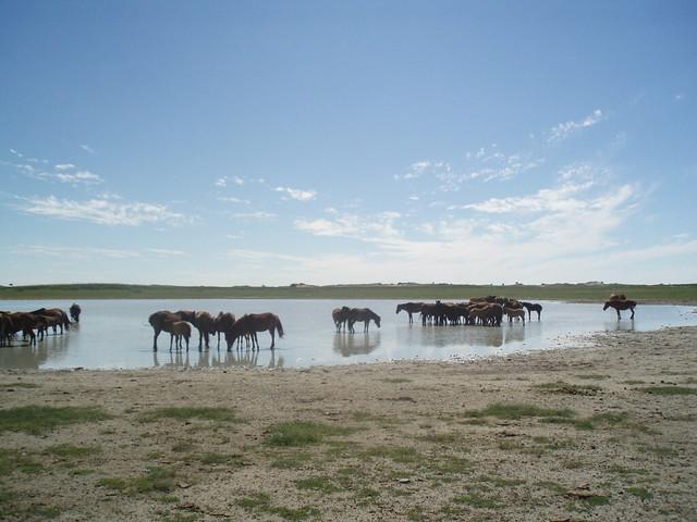 Монголия (3)