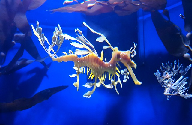 This is some sort of crazy seahorse by bryandkeith on flickr