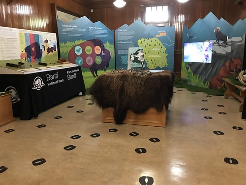 Banff Park Museum Bison Exhibit. From History Comes Alive in Banff National Park