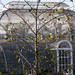 birch and palm house