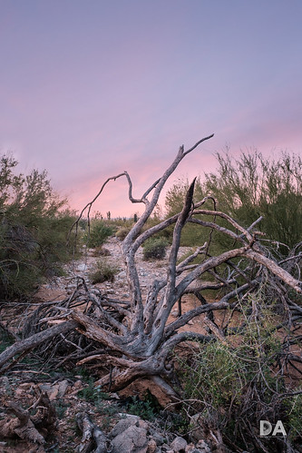 fujinonxf816mmf28r usa wideangle lens fuji fujixt3 review mirrorless dustinabbott desert sunrise travel bare dustinabbottnet comparison xt3 fujifilm test branches arizona photodujour scottsdale unitedstatesofamerica us chileanmesquite