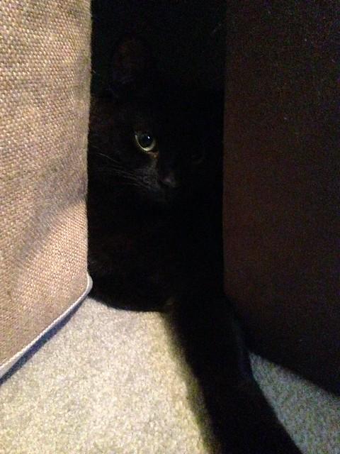 Sami the Black Cat, Apple iPhone 5, iPhone 5c back camera 4.12mm f/2.4
