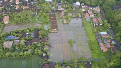 The rice paddies off our villa in Ubud