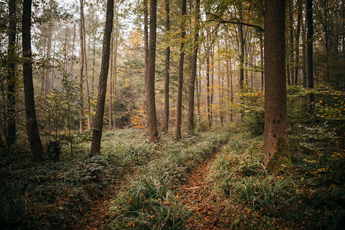 Autumn in the local forest