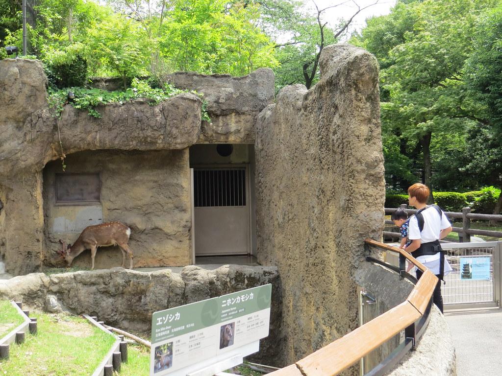 TOKYO ZOO上野動物園(兩光媽咪柳幼幼) (10)