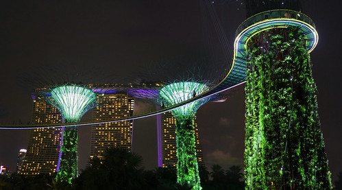 Supertree skywalk in Singapore