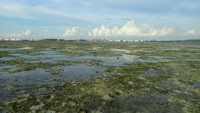 Seagrass meadows at Beting Bemban Besar (South), Nov 2018