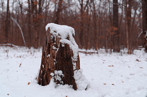 Tree Stump - Wild River State Park, Minnesota