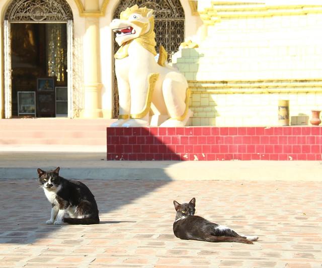 Monywa, 16/01/2012