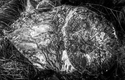 stump b+w green filter