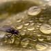 Attracting Flies by David ZImagery