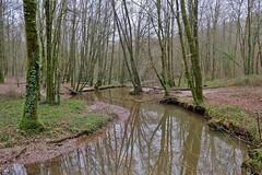 Foret de Mervent, Vendée