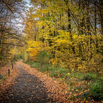 Autumn in Preston