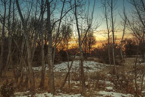 sunrise trees morning winter snow landscapes outdoors idaho