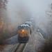 Fog at Morley by Peyton Gupton