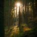Waldviertel_L7252 by wspekner