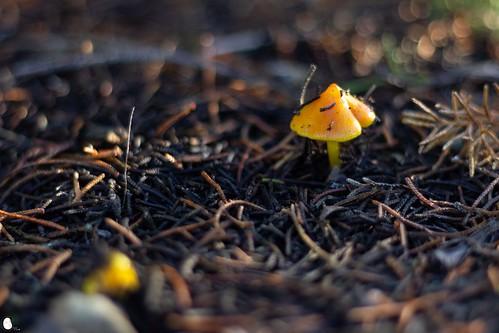 Sombrilla de otoño