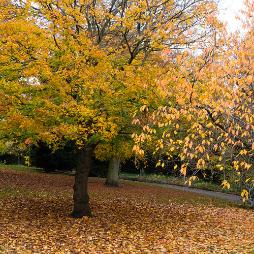 Autumn colours, Nottingham Arboretum