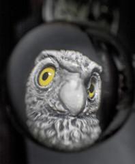 Owl lensball 2