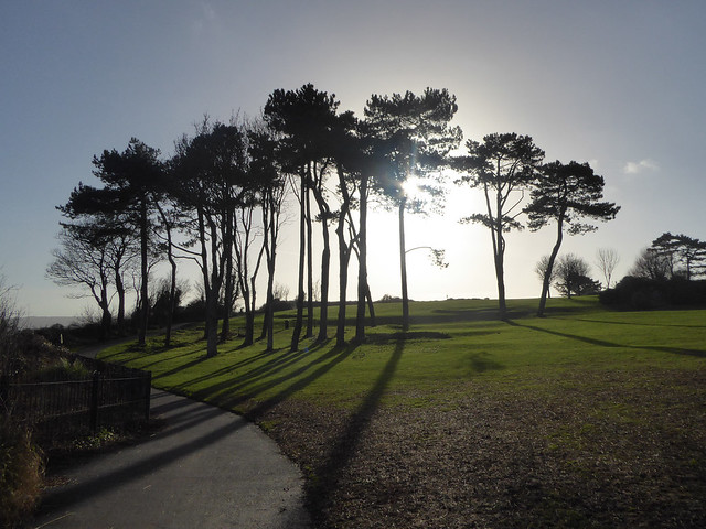low midwinter sun behind pine trees at Roundham Head