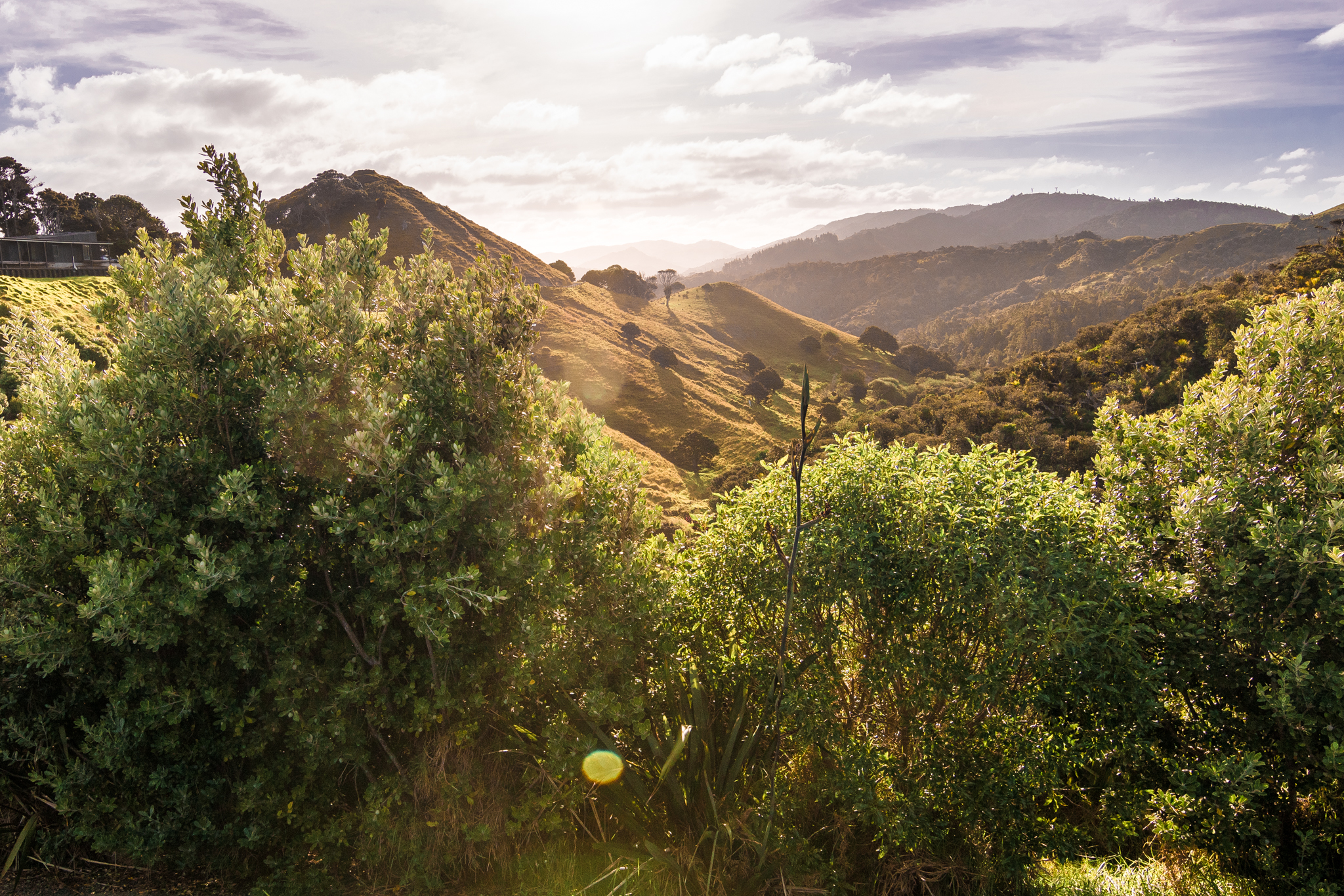 Mangawhai Cliff walk-23