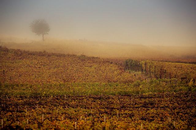 Delinat Weinreise Piemont 2018-2