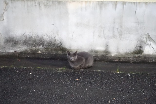 Today's Cat@2018-12-16