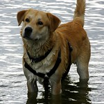 Water Dog - 2006:08:11 15:29:34