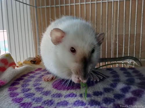 #RattieSitting
