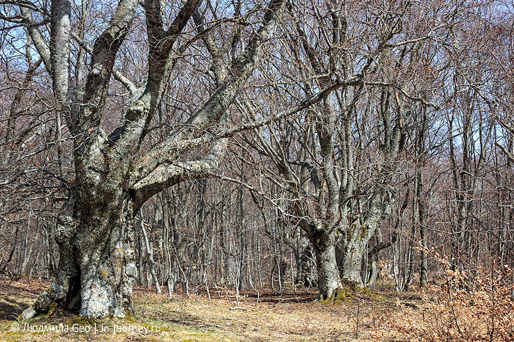 деревья в Крыму