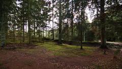 Skoven i Vrads
