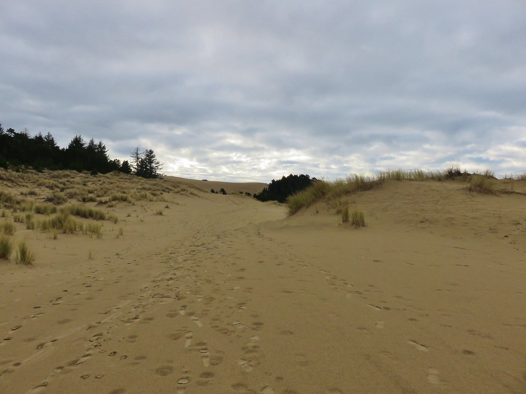 Trail through the dunes at Jessie M. Honeyman State Park
