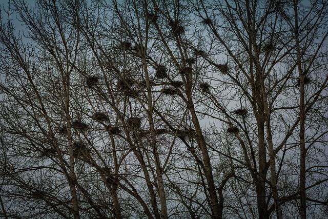 Abandoned nests, Nikon D7100, AF-S Nikkor 70-200mm f/4G ED VR