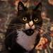 Happy Mew Year! by Fardo.D - Karel's Human