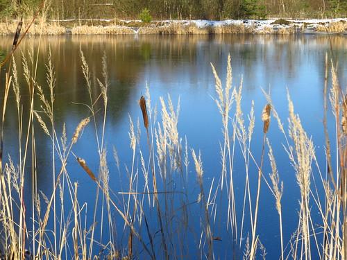 Teich in Eis
