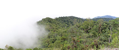 High elevation cloud forest - Bosque enano/Dwarf forest