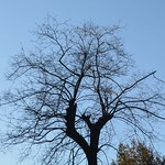 L'inverno dell'albero - https://www.flickr.com/people/134205948@N02/