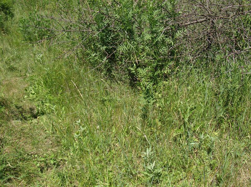 Нижняя Навадвипа 29 мая - собрание и укладка дорог камнем