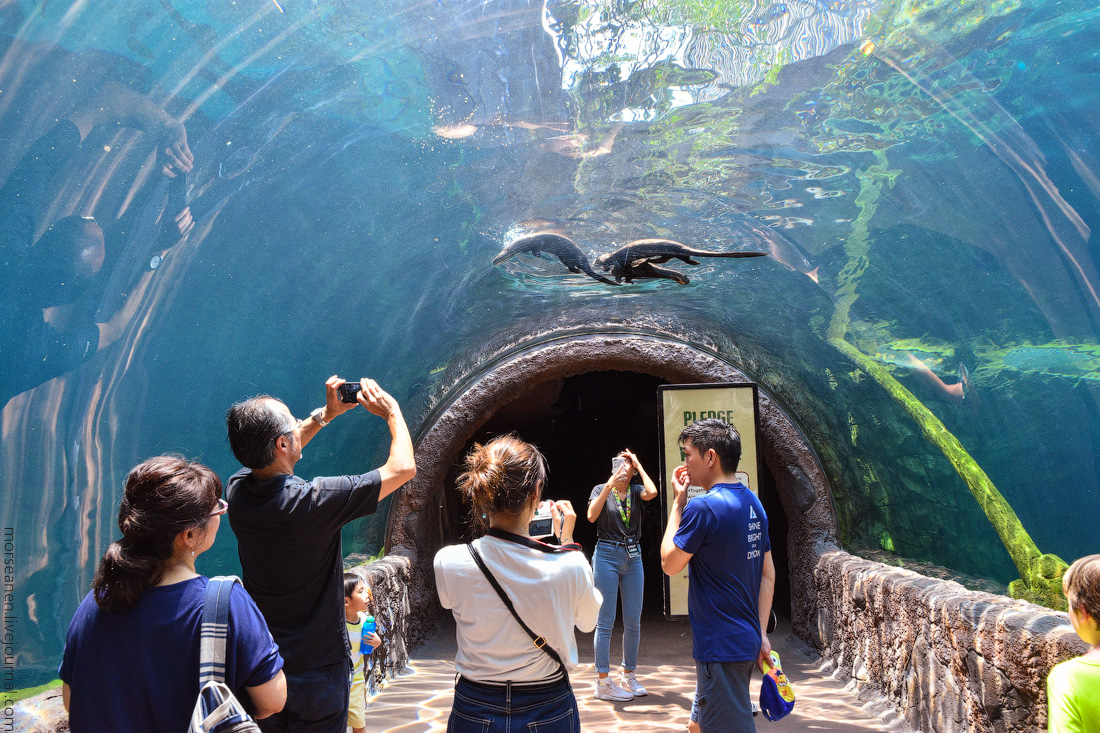 Singapore-zoo-(57)
