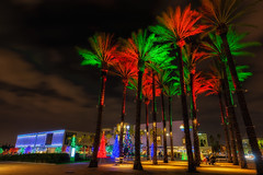 Palm Trees and Christmas Trees