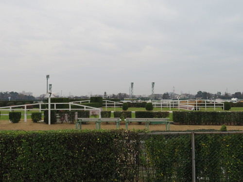 中山競馬場の大生垣と大竹柵