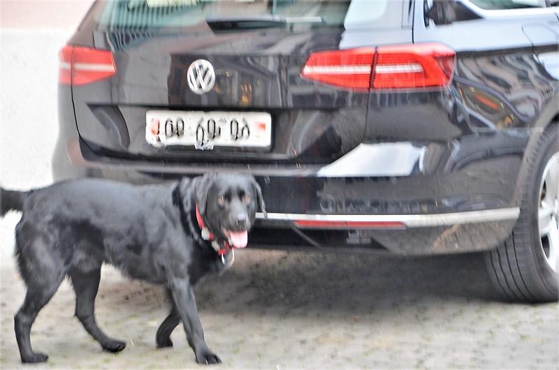Dog 25.12 (2)
