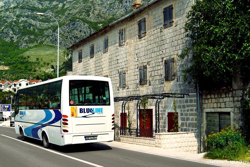 """Автобус """"Blue line"""", едущий по Котору"""