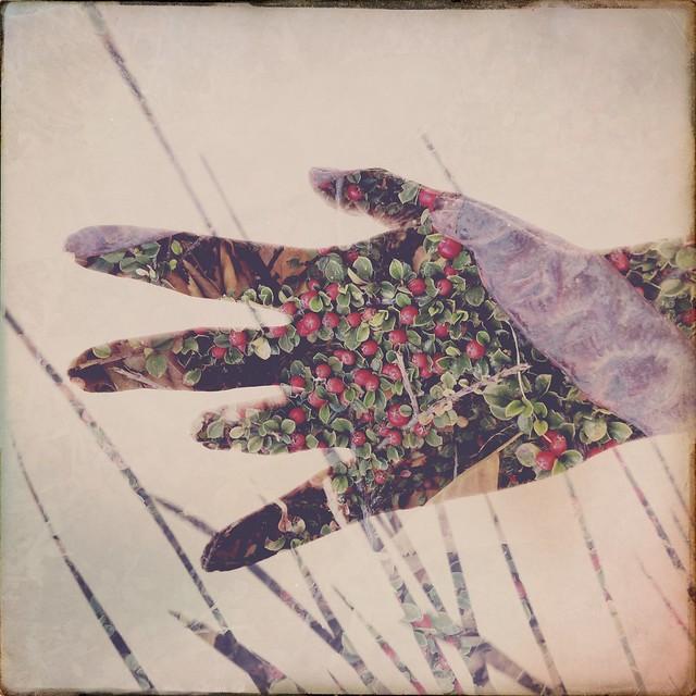 Tints of Autumn 🍂