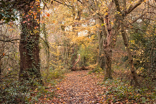 Autumn in Fryent Country Park, London, UK