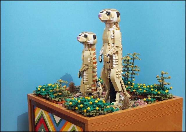 Automatic meerkats 3
