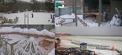 Snow Storm_20190120_001