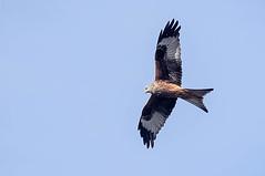 Oiseaux en Aragon (Espagne)